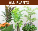 all-plants