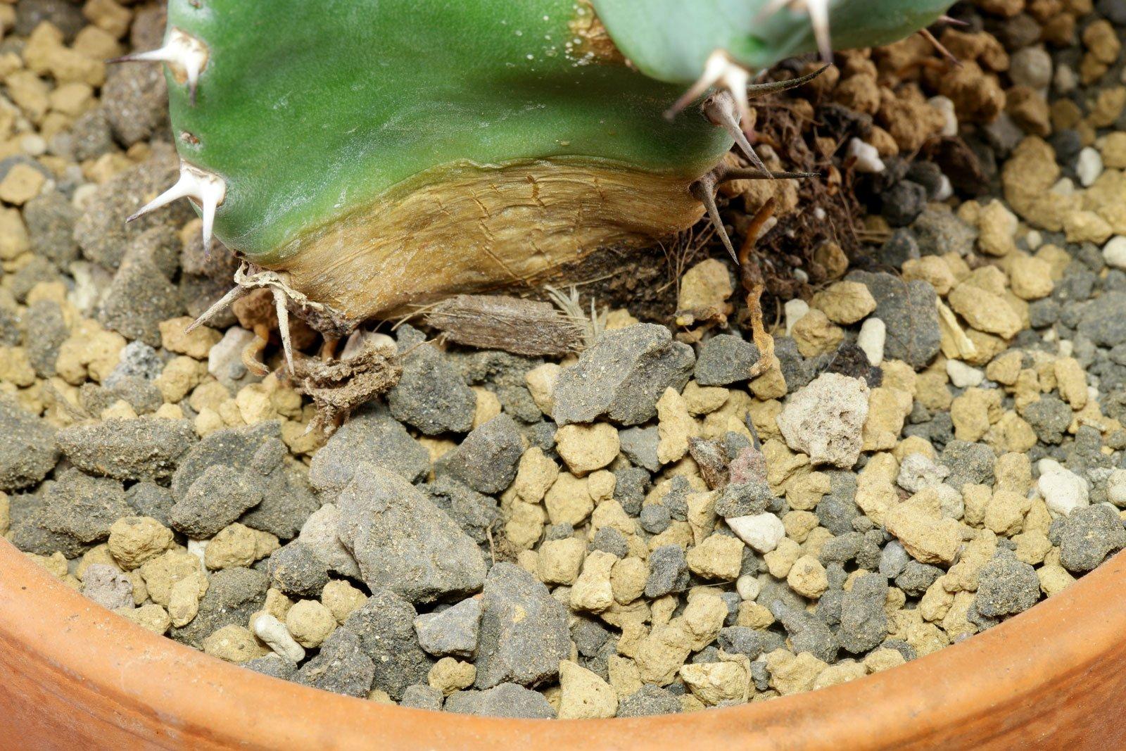 Soil pumice akadama