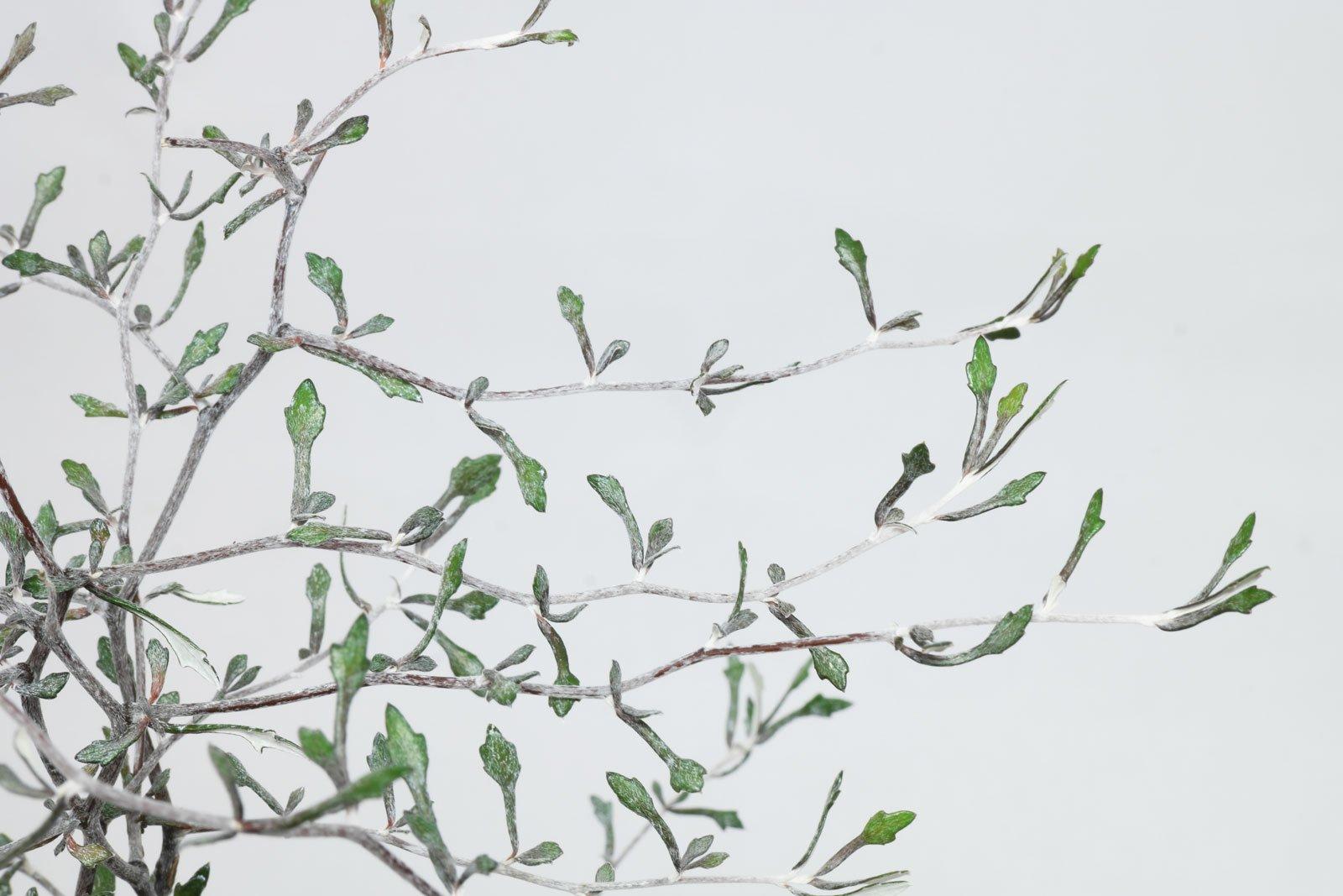 Wire Nettingbush